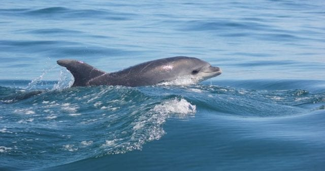 Dolphin Watching from Sagres